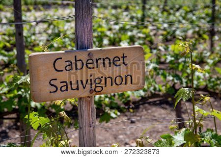Cabernet Sauvignon Wine Sign On Vineyard. Vineyard Landcape