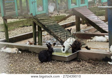 A Group Of Rabbit At Rabbit Farm Or Zoo
