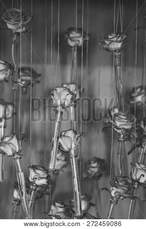 Roses In Glass Tube Vases, Floral Decor, Spring. Flowers With Red Petals Hang On String On Orange Ba