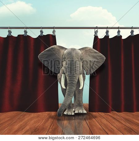 The Elephant Entering The Stage Through Curtain.