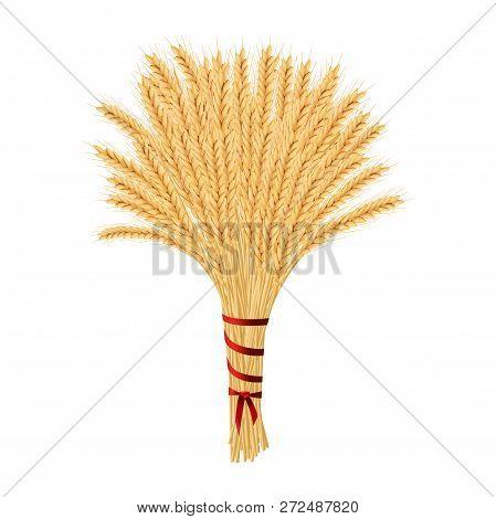 Bunch Of Wheat. Reap Of Spiked Grain Heads. Christmas Sheaf. Sheaf Of Crop Ears. Spikes, Julkarve, J