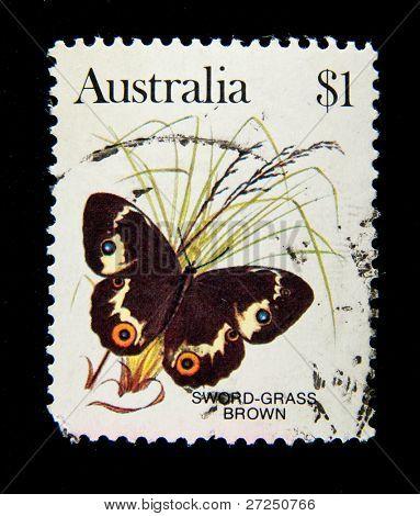 AUSTRALIA - CIRCA 1983: stamp printed by Australia, shows butterfly Sword grass brown, circa 1983