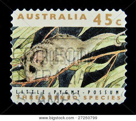 AUSTRALIA - CIRCA 1992: stamp printed by Australia, shows opossum, circa 1992