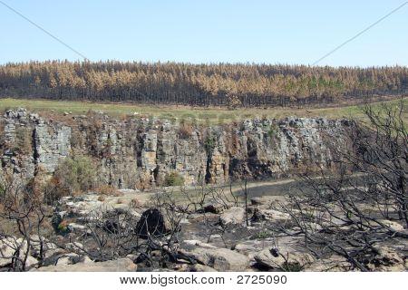 Burnt Ladscape