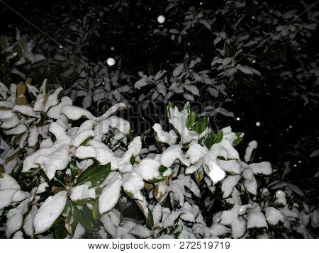 Abstract Featuring Snow Falling Against The Night Sky In The Background With Magnolia Leaves In The