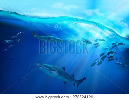 Underwater life in the tropical sea.