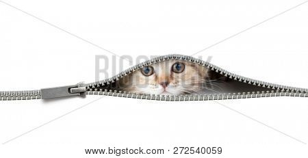 cat in open zipper hole isolated