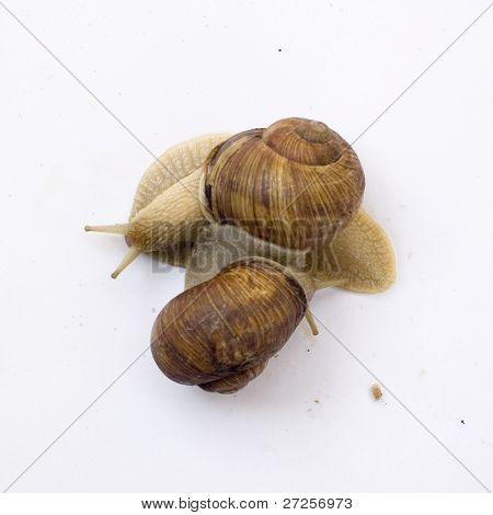 two lovely snail on white background