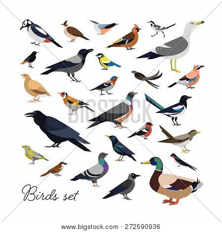Bundle of city and wild forest birds drawn in modern geometric flat style, side view. Set of colorful cartoon avians or birdies isolated on white background. Trendy ornithological vector illustration. poster