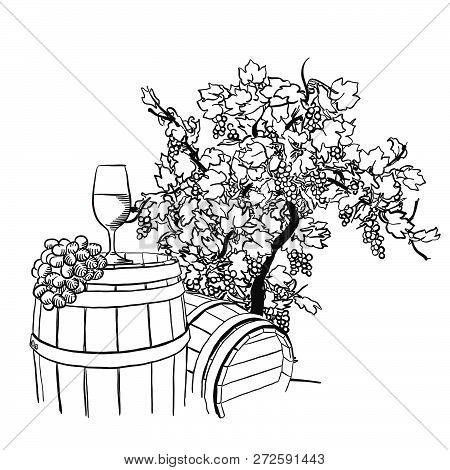 Vine Barrel, Glass And Tree Drawing, Hand-drawn Vector Food Illustration For Vine Label And Social M