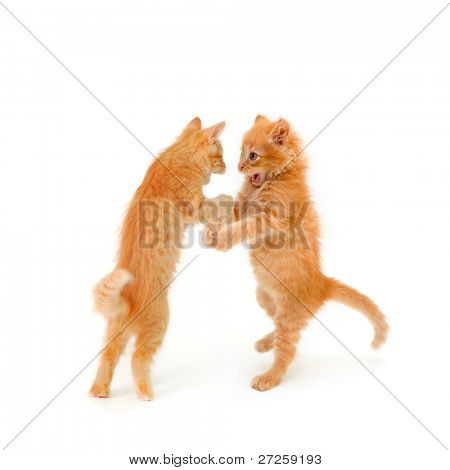 two friends kittens dancing and speaking isolated on white background