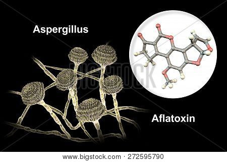Fungi Aspergillus Producing Aflatoxin B1, A Potent Carcinogen, 3d Illustration. These Fungi Often Co