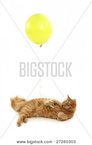 kitten holiday with green balloon isolated on white background poster