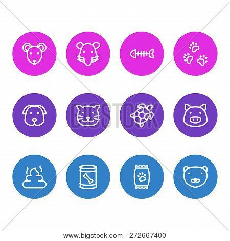 Vector illustration of 12 animal icons line style. Editable set of pet poo, kibble, dog food in can and other icon elements. poster