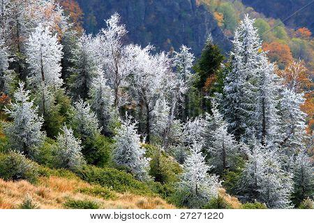 Autumn landscape in Cozia National Park, Romania