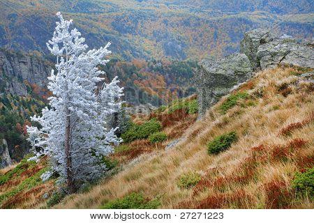 Late autumn landscape in Cozia National Park, Romania