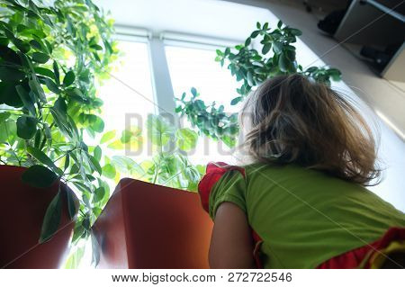 Little Girl Looking Up From Below On Plants On The Window. Big World. Child View.