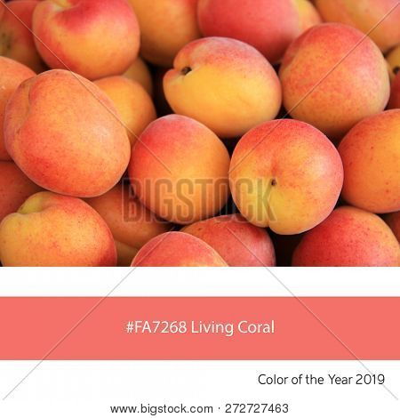 Fresh apricots as an example of the trend colour of the year 2019, Living Coral, with corresponding colour hex code.