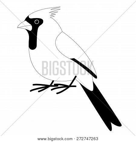 Cardinal Bird , Vector Illustration ,  Lining Draw ,profile View