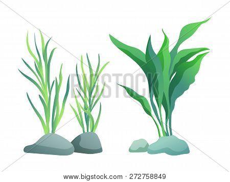 Sea Or Aquarium Algae Types Vector Illustration Set On White. Straight And Wavy Seaweed With Large A