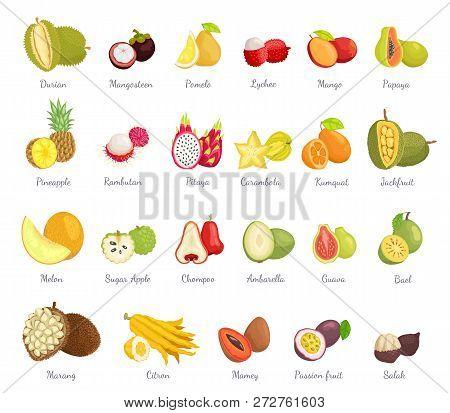 Sugar Apple And Guava Set Vector. Bael Mango, Pitaya And Jackfruit, Salak Coconut. Ambarella And Ram