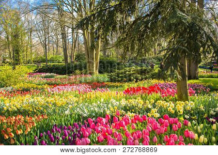 Spring Blooming Sunny Park. Flowers, Green Grass, Young Leaves On The Trees, Sunny Spring Day. Sprin