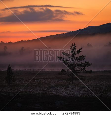 Foggy White Night In The Area Of Nordgruvefeltet, Middle Norway. Boreal Pine Forest.