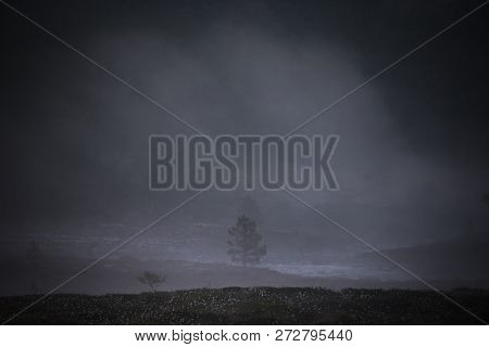 Misty And Foggy Landscape Of Norwegian White Night. Nordgruvefeltet Area.