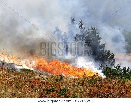 Wild bush vegetation in fire poster