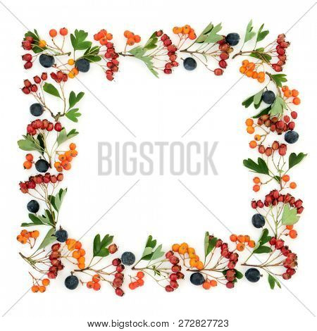 Absract autumn berry border with sloe, hawthorn and rowan berries on white background with copy space.