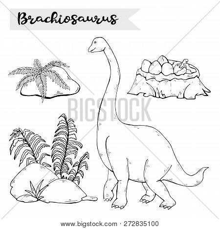 Vector Brachiosaurus With Plant And Stone Isolated