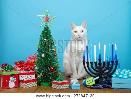 Adorable White Kitten With Heterochromia (odd Eyes) Sitting Between A Christmas Tree And A Hanukkah