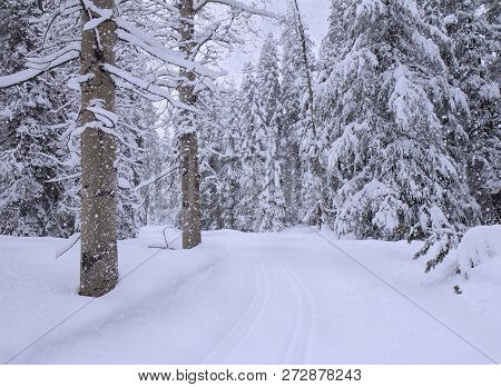 Landscape With Snowfall In Snowy Winter Forest.