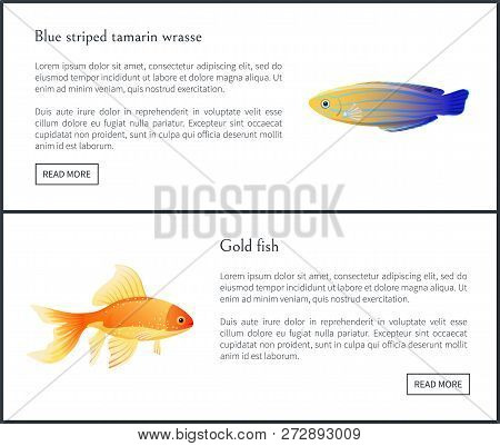 Blue Striped Tamarin Wrasse And Gold Fish Posters Titles Set. Marine Species Used To Dwell In Aquari