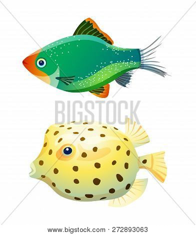 Green Tiger Barb And Boxfish Isolated On White. Fresh And Saltwater Aquarium Pets Silhouette On Blan