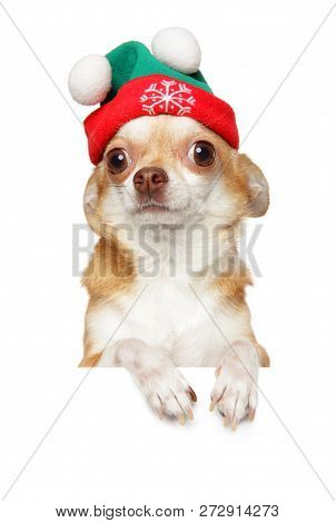 Chihuahua Puppy In Winter Hat Above Banner, Isolated On White Background. Baby Animal Theme