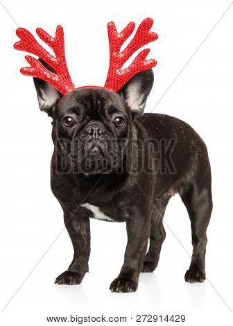 French Bulldog Puppy With Red Carnival Antlers Of The Christmas Deer On White Background. Animals Th