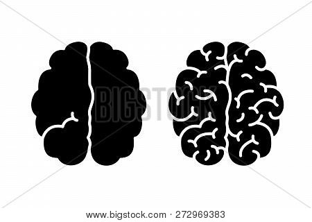 Hemispheres Of The Brain With One And With Many Gyrus And With Many