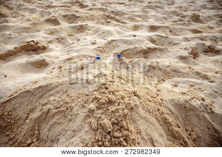 Woman Feet In Yellow Sand Of Tropical Beach. Tourist Digged In Beach Sand. Seaside Activity Digging