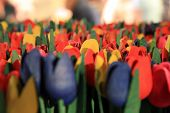 Coloured wooden flowers - Dutch tulips. Spring flowers. poster