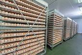 Egg Factory with Quality Control on egg production line from breeders in Hatchery Unit poster