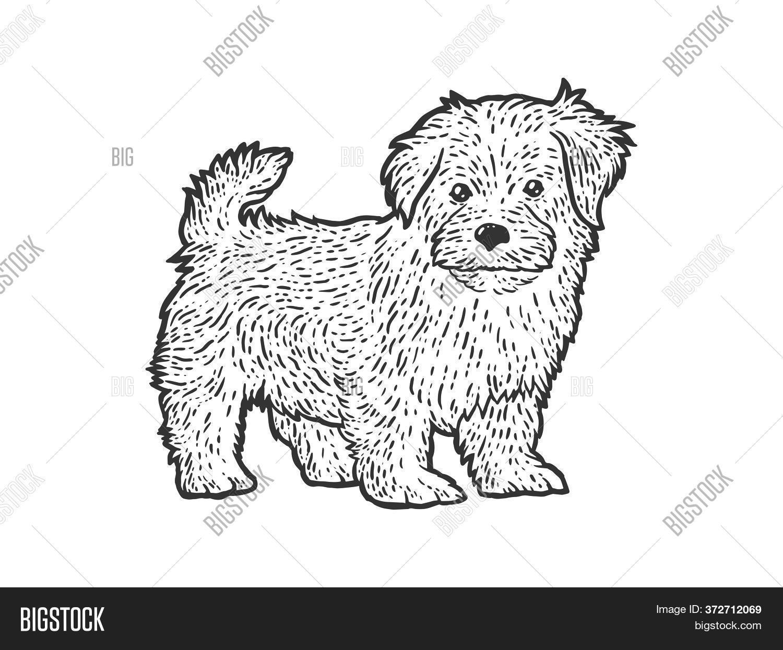 Cute Fluffy Puppy Image Photo Free Trial Bigstock