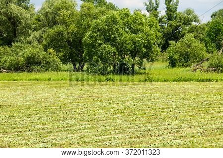 Freshly Mowed Meadow With Rows Of Hay. Agricultural Summer Landscape