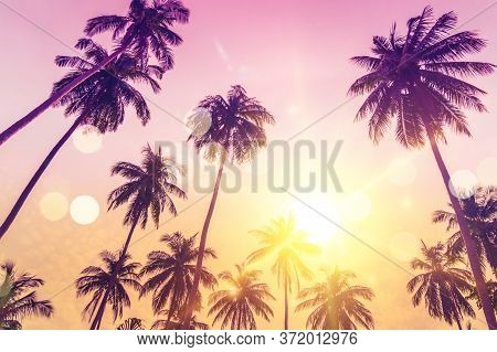 Tropical Palm Coconut Trees On Sunset Sky Flare And Bokeh Nature.