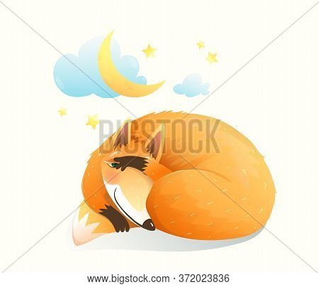 Cute Sly Red Fox Sleeping Under The Moon And Night Starry Sky, Baby Animal Sweet And Sleepy Cunning