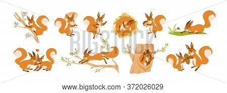Set Of Cute Squirrel Character Vector Flat Illustration. Collection Of Funny Wild Animal Parent, Chi