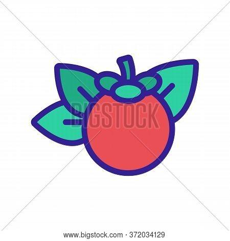 Mangosteen Citrus Fruit Icon Vector. Mangosteen Citrus Fruit Sign. Color Symbol Illustration