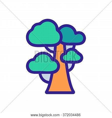 Eucalyptus Tree Icon Vector. Eucalyptus Tree Sign. Color Symbol Illustration