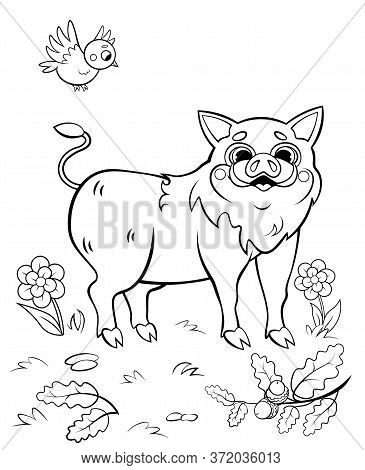 Coloring Page Outline Of Cute Cartoon Hog Or Boar With A Bird. Vector Image With Nature Background.