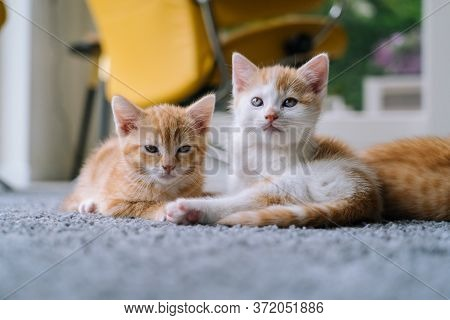 Cute Little Red Cats Sitting On Yellow Chair Near Window On Background. Young Cute Little Red Kitty.